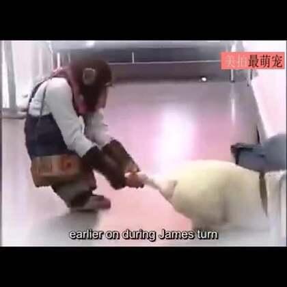 #宠物#哈哈哈哈小庞还真是个双重标准的宝宝,硬薅着腿把人家拽出来抽血了,轮到自己时当场怂了。😂