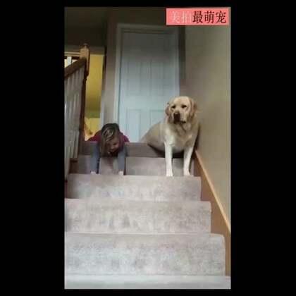 #宠物#最近国外又开始流行滑楼梯比赛,就是后腿放松伸直,靠前肢力量滑下楼梯。一位网友家的拉布拉多Sammy也陪着小主人滑楼梯,小主人的笑声真的好幸福!汪星人还故意让着她⋯😍💘