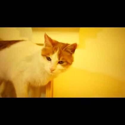 你确定你会抱猫吗?你知不知道错误的抱猫方式可能会让猫咪受伤哟!今天的喵语就来普及一下正确的抱猫姿势,让人喵都开心愉悦的那种!PS:视频中有待领养的小喵出镜~欢迎领养哟~#宠物##喵语#