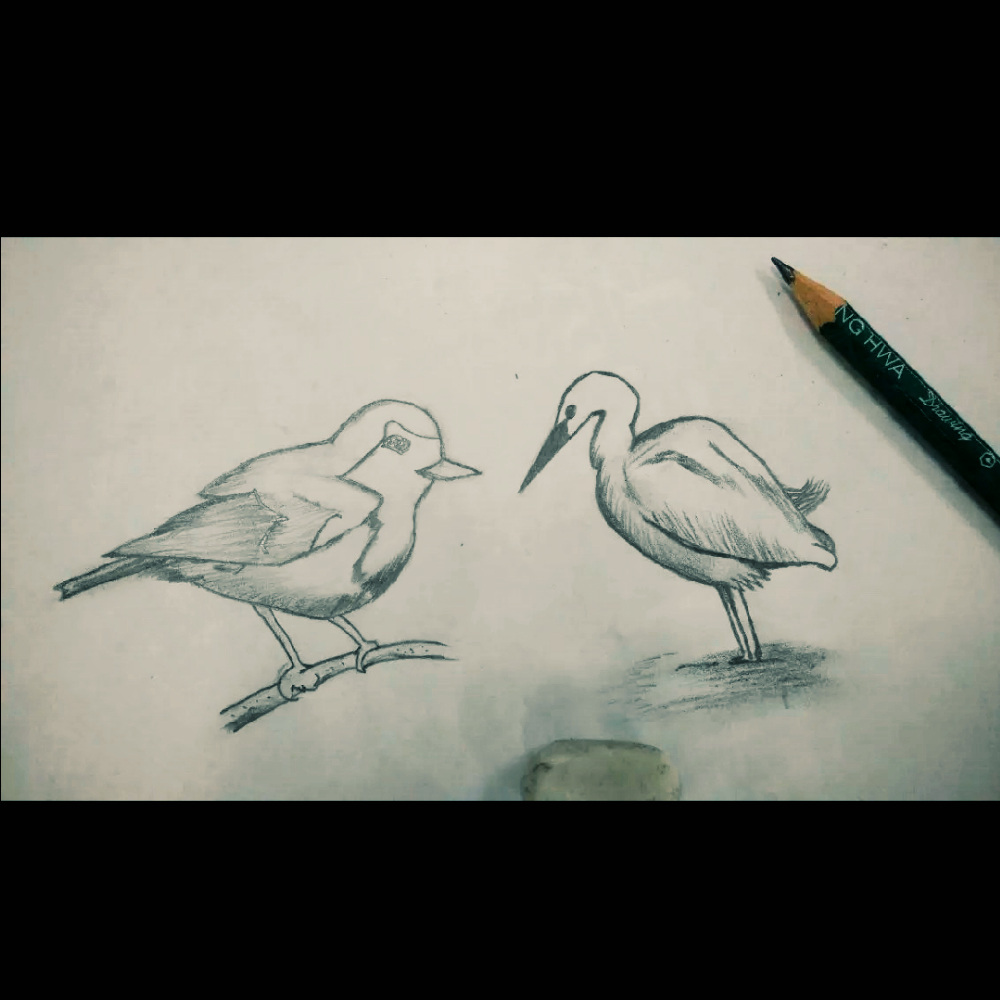 16-02-16 02:52     #随手美拍# #手绘铅笔画# #铅笔画# #手绘动物