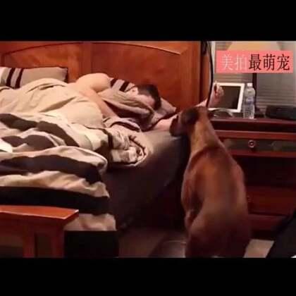 #宠物#自从养了狗,从此告别自然醒。。😀