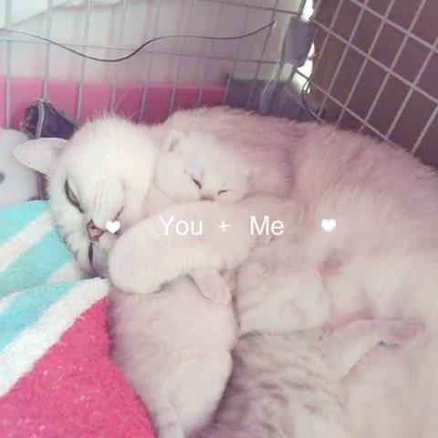 可爱的宝宝05#宠物#