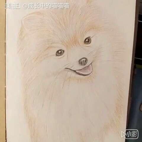 彩铅##手绘##狐狸狗#感觉画宠物比画人简单多了!