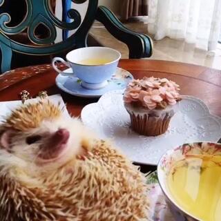 富贵小刺猬🐾带你走进#拿小猫咖啡厅#3店❤️一杯茶☕️一个cake🍰一个美好的下午❤️更多#非洲迷你刺猬##宠物#美图欣赏尽在#吉迷你宠物窝#🍊微信104002038