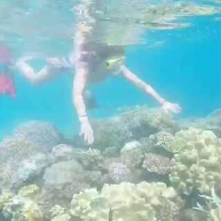 #澳大利亚大堡礁##大堡礁浮潜#😹