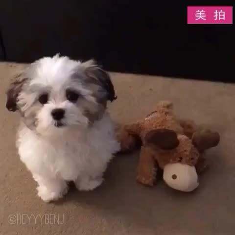 """【最萌宠美拍】#宠物#主人问狗狗:""""谁是你的好..."""