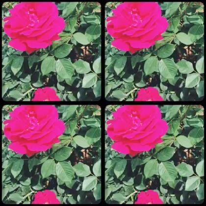 #faceu#花儿为什么这样红........🎼........为什么这样红.......🎼……红的好像.......🎼……燃烧的火......🎼.......象征着爱情.....💃🏻💃🏻💃🏻