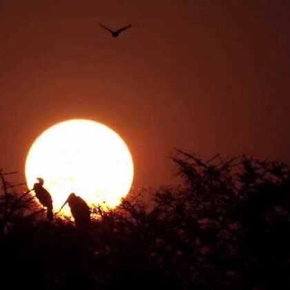 观鸟者的天堂