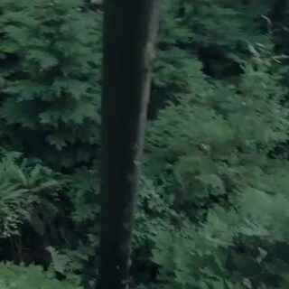 #无人机#假如有一天你在丛林中迷路了,你最希望看到什么?
