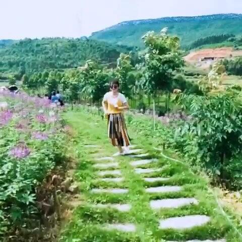 宿松柳平风景图片