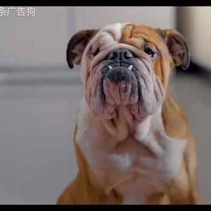 狗狗的白日梦😂#广告#