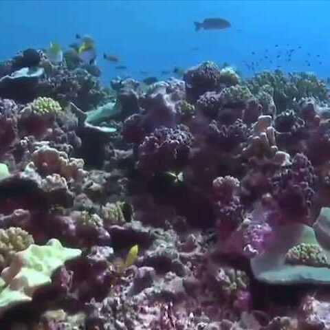 【联合国美拍】健康的海洋,健康的地球