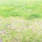 黄石公园看间歇泉!#在路上#