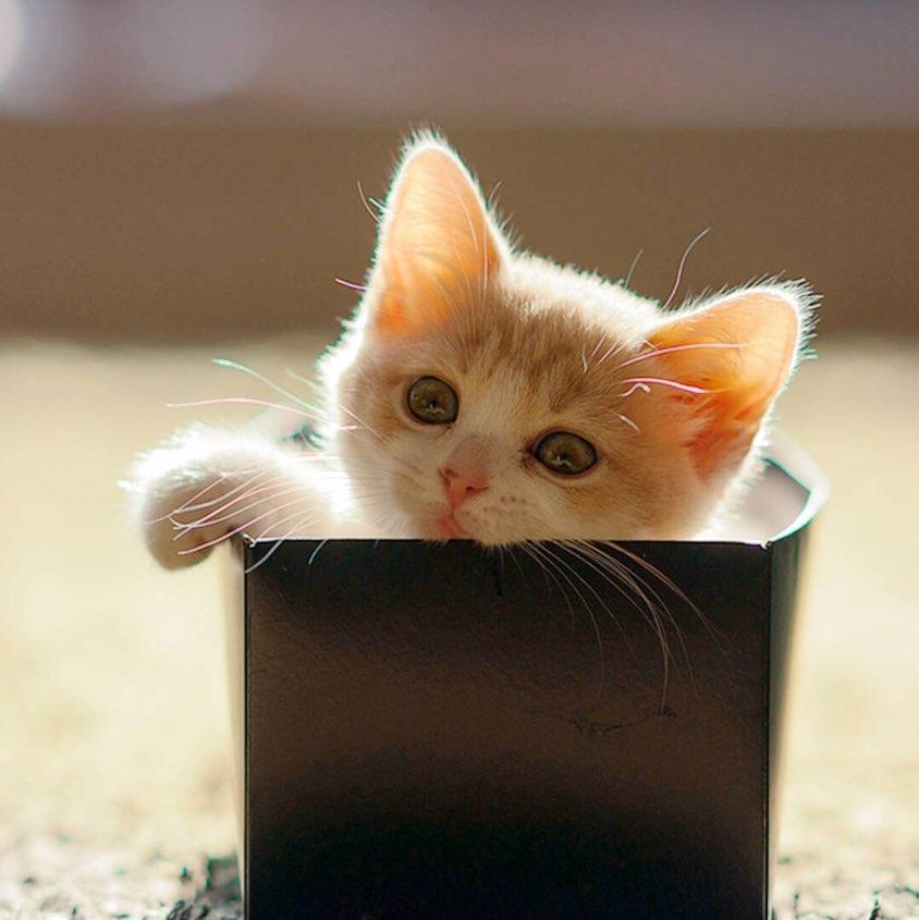 伤心猫动物图片大全