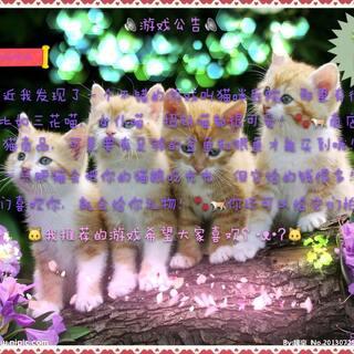 #游戏##猫咪后院#还不错,希望大家喜欢。 (公告亲手制作30分钟)💎💎💎