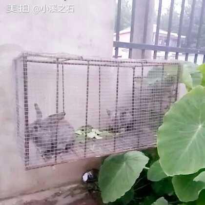 花花谢谢你送我的小白兔☺长大了
