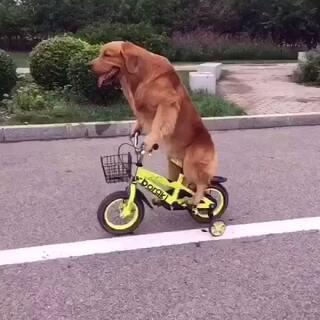 #宠物##在路上##搞笑宠物#