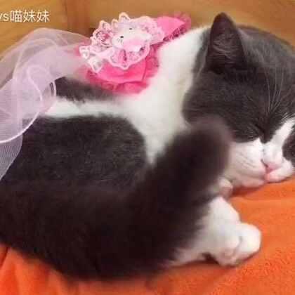 穿着性感露肩睡衣👗自己哄自己睡觉了😘#宠物##宠物也性感##宠物爱摇尾巴#