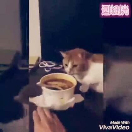 #逗比时光#一哥们打包了臭豆腐回家,然后家里的喵。。我不会告诉你最后那是埋屎的动作😂