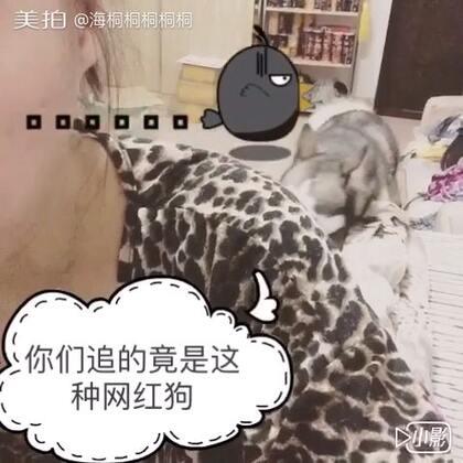 #宠物#😂😂辣点低的庞友注意保护眼睛!!