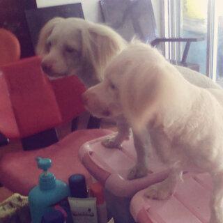#宠物照镜子#@流星亮晶晶 @玉蝶菲菲 @咖啡✌👄 @LOKEY小号 @洛基和女孩的幸福时光几估加^V^