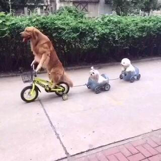 #宠物##搞笑##在路上#