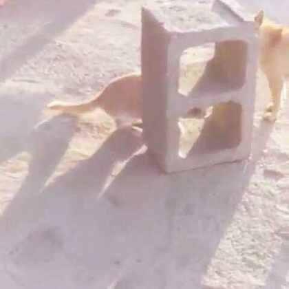 #可爱动物##猫狗大战第一回合#