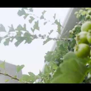 食草男的芝心肉饼 #味阵视频##芝心肉饼##街边小吃##66个全网疯转的美拍##美食总动员#