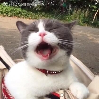 🙊嘘,憋说话,你的面前有一只会笑的喵😏笑得这么甜美😆可有人喜欢☺(🐱妹:我的笑是不是迷倒众生啊!有没人回答,没有人回答我晚点再问🌚)#宠物##微微一笑很倾城##喵妹爱呲牙#