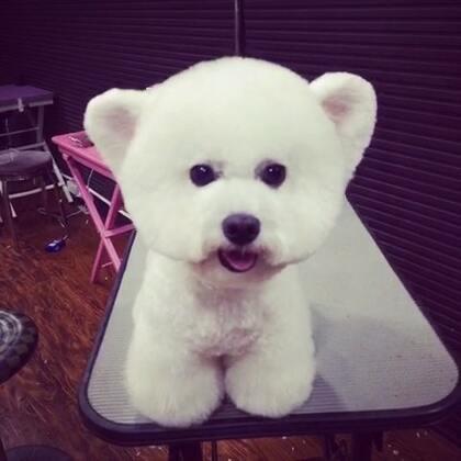 我是熊宝宝。#立耳贵宾#