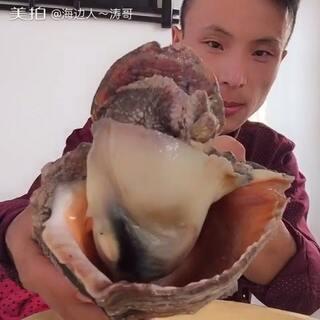 #吃秀##美拍金牌播主#海螺的祖宗,超巨大,#我要上热门@美拍小助手#