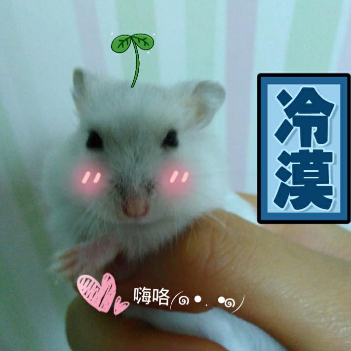壁纸 动物 狗 狗狗 猫 猫咪 小猫 桌面 711_711