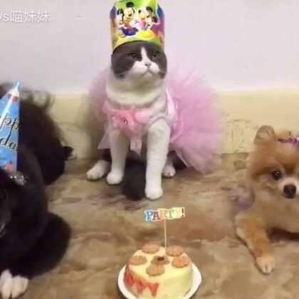 🎂🎂喵妹2周岁生日🌹麻麻希望你快快乐乐,健健康康☺不知道阿妹你对着蛋糕许了什么愿望呢😘#宠物#