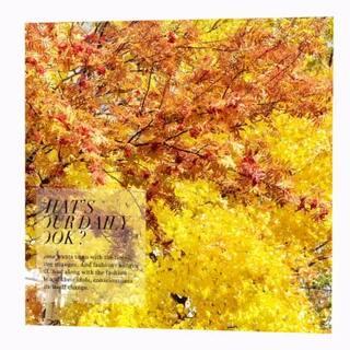 #北海道##北海道旅行##北海道印象##层云峡# 看过的最美的秋景 层层叠叠的斑斓的秋季 我最爱的秋天#秋天的颜色#