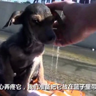 救援组织希望之爪接到一个求助电话,有人砍断了一只小狗的腿还把它丢进运河里,工作人员马上开车赶往现场救回了小狗……