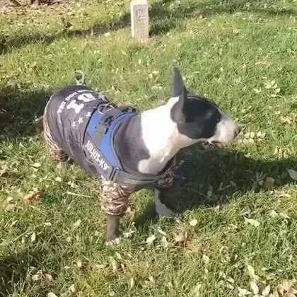 #我的自拍日记##在路上#狗狗也要防寒😊
