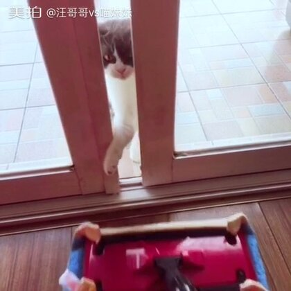 自从养了猫🐈拖地板都是种乐趣……#宠物##逗比喵星人#