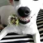 #宠物#好灿烂的笑容,好美丽的花儿,从了吧!😆