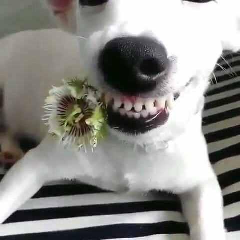 【最萌宠美拍】#宠物#好灿烂的笑容,好美丽的花...