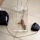 网友抓到一只老鼠,本着不杀生的心,决定度化它。。。😂😂#搞笑#