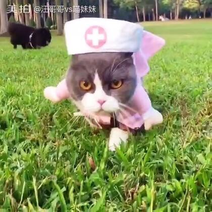 哎呦我滴妈呀😂今天本护士出诊😵就是这病人家在草原😱我都迷路了🤔还是上我的宝马,让铲屎官给我推过去☺#宠物##宠物制服诱惑##带宠物旅行#