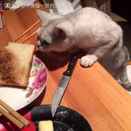 #吃秀##萌宠##喵星人#😁,馋猫一饼