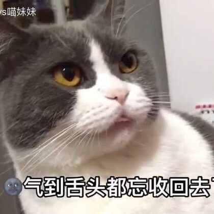 想知道阿妹·见到视频里面的帅锅猫猫的神反应吗🤗气呼呼😖的小表情·加上骂咧咧的小嘴👄时而扭头张望、时而又呆坐在那里~谁能告诉我~阿妹此时的内心独白究竟是什么呢!😏#宠物##喵妹爱呲牙##宠物内心小剧场#