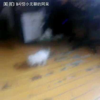 【사랑小无聊的阿呆美拍】16-12-17 14:50