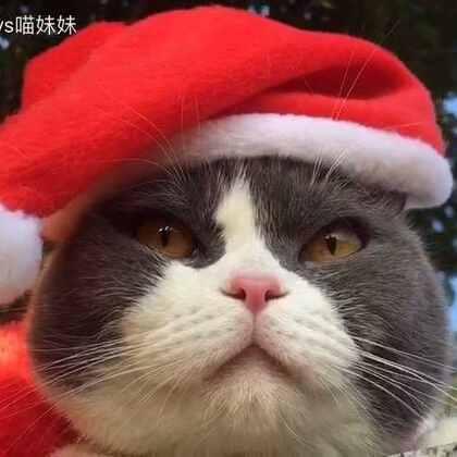 分享一只正在晒太阳的圣诞喵🎅看更多有趣小视频关注微信 miaowang-123 #宠物#提前㊗️大家#圣诞节#快乐💝#萌宠圣诞cosplay#