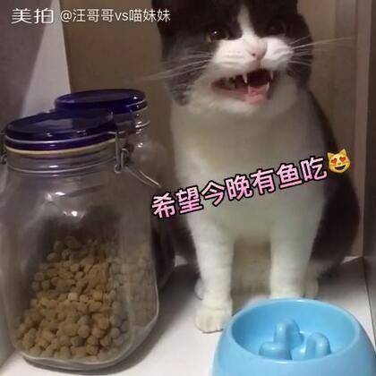 #宠物内心小剧场#摆乌龙的喵星人😂#宠物##喵妹爱呲牙#