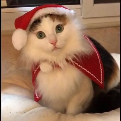 #萌宠圣诞cosplay#跟着西蒙、莎莎、肉肉一起来圣诞cosplay吧,祝大家圣诞🎄节快乐!嗨起来……😁🙈😜🎉🎊🎁🎄🍬#宠物#