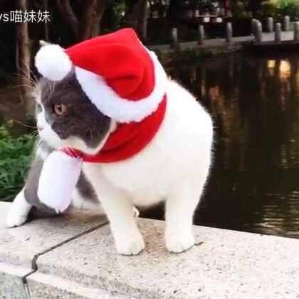 🙈匍匐前进溜边走🙄圣诞节快到了😂麻麻说美腻的圣诞喵出去会被人抱走🙃散个步都不安心🙄我说黑哥,你不保护我,跑前头干啥呢😡#宠物##带宠物旅行##萌宠圣诞cosplay#