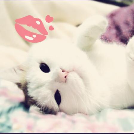 可爱小猫苹果壁纸