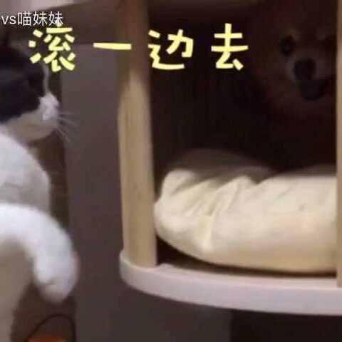 【汪哥哥vs喵妹妹美拍】爆料爆料📣扒一扒阿妹~不为人知...
